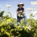 Torrential Rain Leaves U.S. Midwest Vegetable Farmers Struggling With No Aid in Sight